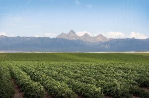 Teton Mountains with Potato Fields